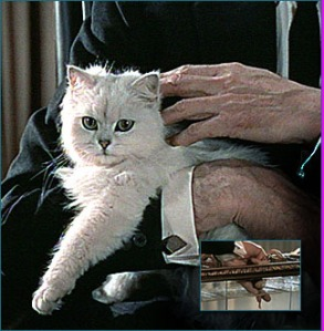 Blofeld's Cat from James Bond films